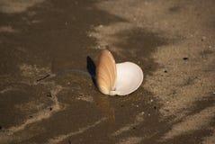 Abra el shell Foto de archivo libre de regalías
