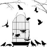 Abra a gaiola e os pássaros de pássaro Imagens de Stock Royalty Free