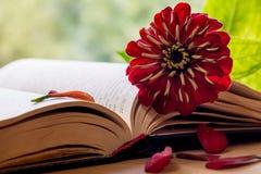 Abra la biblia y la flor foto de archivo libre de regalías