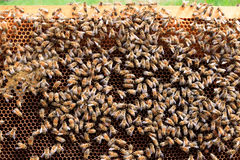 Abra la colmena, apicultura fotos de archivo libres de regalías