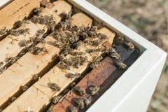 Abra la colmena con las abejas Fotografía de archivo libre de regalías