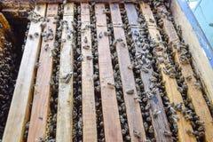 Abra la colmena de la abeja Tablón con el panal en la colmena El arrastre de las abejas a lo largo de la colmena Abeja de la miel Imagen de archivo