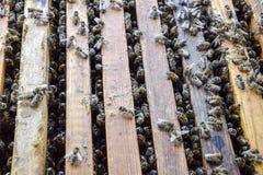 Abra la colmena de la abeja Tablón con el panal en la colmena El arrastre de las abejas a lo largo de la colmena Abeja de la miel Fotografía de archivo libre de regalías