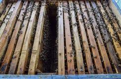 Abra la colmena de la abeja Tablón con el panal en la colmena El arrastre de las abejas a lo largo de la colmena Abeja de la miel Fotos de archivo