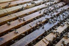 Abra la colmena de la abeja Tablón con el panal en la colmena El arrastre de las abejas a lo largo de la colmena Abeja de la miel Imagen de archivo libre de regalías