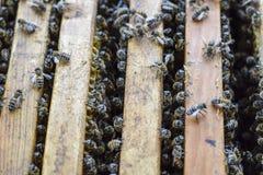 Abra la colmena de la abeja Tablón con el panal en la colmena El arrastre de las abejas a lo largo de la colmena Abeja de la miel Imagenes de archivo
