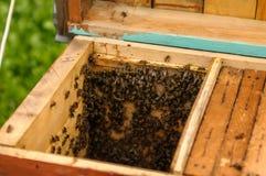 Abra la colmena de la colmena, mostrando los marcos que habitan abejas de la miel imagen de archivo