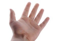 Abra la palma Imagen de archivo libre de regalías