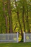 Abra la puerta que lleva al bosque Foto de archivo libre de regalías
