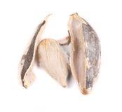 Abra la semilla de girasol Foto de archivo