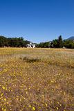 Abra las flores del campo y del resorte de granja foto de archivo libre de regalías