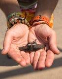 Abra las manos femeninas que sostienen una mariposa Fotografía de archivo libre de regalías