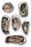 Abra las ostras aisladas en un fondo blanco Foto de archivo libre de regalías