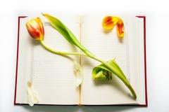 abra a nota do diário com tulipa vermelho-amarela Fotos de Stock Royalty Free