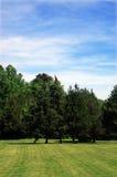 Abra o campo no dia ensolarado Fotografia de Stock Royalty Free