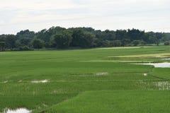 Abra o campo verde bangladesh Fotos de Stock Royalty Free