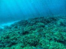 Abra o fundo do mar Fotografia de Stock