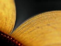 Abra o livro da folha de ouro Fotografia de Stock