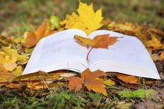Abra o livro em um jardim do outono Imagem de Stock Royalty Free