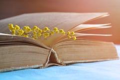 Abra o livro velho com as flores amarelas da mimosa na tabela sob a luz solar morna - vida da mola ainda em tons pasteis naturais Fotos de Stock Royalty Free