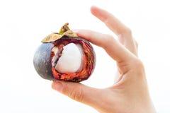 Abra o mangustão disponivel Fotografia de Stock