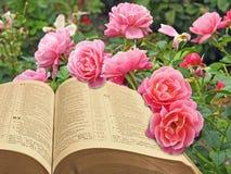 Abra o reino da paz da Bíblia de deus espiritual imagens de stock