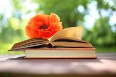 Abra os livros exteriores O conhecimento é potência Registre em um livro da floresta em um coto imagem de stock royalty free