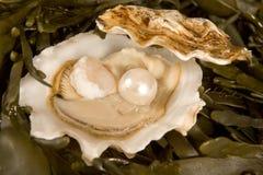 Abra a ostra com pérola Imagem de Stock
