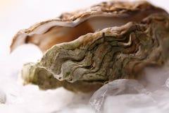 Abra a ostra no gelo Fotografia de Stock