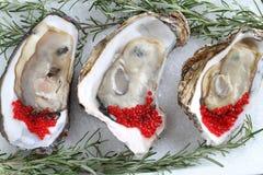 Abra ostras no fundo gelado Imagem de Stock Royalty Free