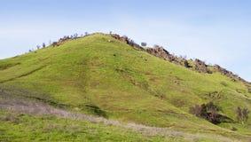 Abra a parte superior do monte com gramas novas da mola Fotografia de Stock Royalty Free