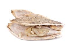 Abra a semente de girassol. Imagem de Stock