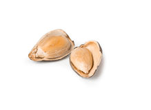 Abra a semente de girassol Imagem de Stock Royalty Free