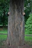 Abrace uma árvore grande na natureza sem tocar Foto de Stock Royalty Free
