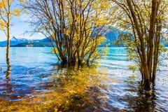 Abraham Lake i en flod Royaltyfri Bild