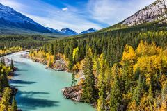 Abraham Lake in the Rockies. Abraham Lake is the beautiful lake in the Rockies. Dense forests cover the lake shores. Warm sunny day in autumn. The concept of Stock Images