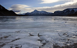Abraham Lake Winter Royaltyfri Fotografi