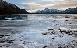 Abraham Lake Winter Arkivfoto