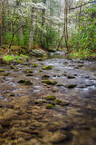 Abrams liten vik, Cades liten vik, Great Smoky Mountains Arkivbild