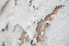 Abrasión blanca del muro de cemento foto de archivo libre de regalías