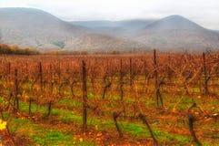 Abrau Durso Krasnodar för vingårdhöstberg region Ryssland Royaltyfri Foto