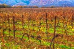 Abrau Durso Krasnodar för vingårdhöstberg region Ryssland Royaltyfri Bild