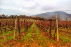 Abrau Durso Krasnodar för vingårdhöstberg region Ryssland Arkivfoto