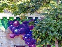 ABRAU DURSO, RUSSIA. In Abrau-Durso everywhere grapes. Even on buildings. Closeup. Summer Stock Image