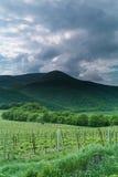 Abrau Durso Vineyards in. Krasnodar region. Russia. 08.05.2016 Royalty Free Stock Images