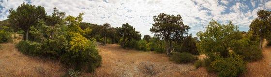 Abrau-Halbinsel, Reserve Utrish Stockfotos