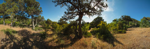 Abrau-Halbinsel, Reserve Utrish Lizenzfreie Stockfotografie
