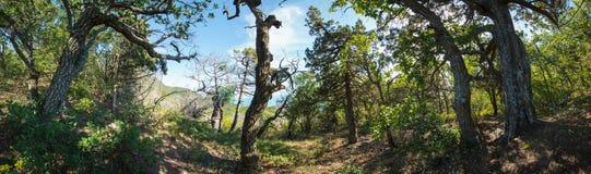 Abrau-Halbinsel, Reserve Utrish Lizenzfreies Stockfoto