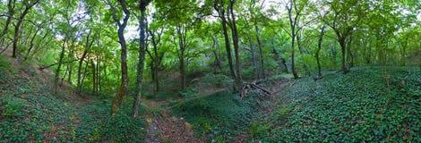 Abrau-Halbinsel, Reserve Utrish lizenzfreie stockfotos