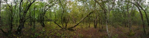 Abrauschiereiland, reserve Utrish Royalty-vrije Stock Afbeeldingen